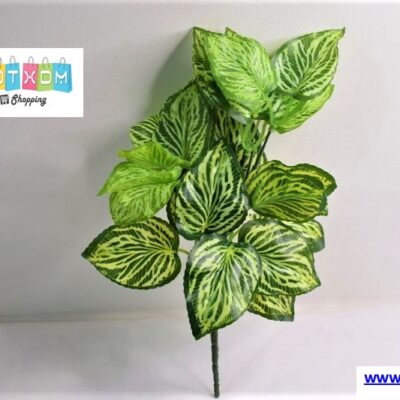 Διακοσμητικό φυτό 35cm – Συγκόνιο