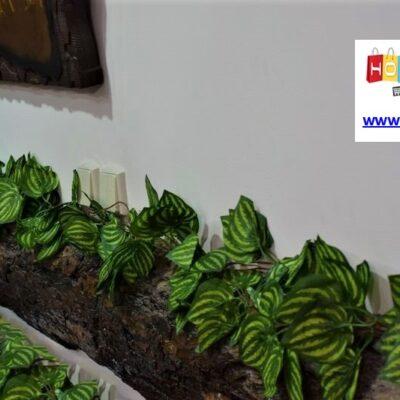 Διακοσμητικό φυτό 2,4m – Συγκόνιο
